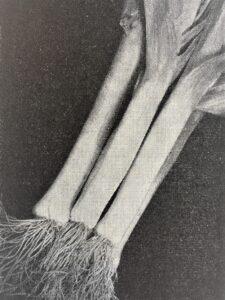 Porre Gennevilliers. Billedet er fra J. E. Ohlsens Enkes hovedkatalog Fagstof for Fagfolk fra 1954.