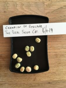 Champion of England. Fra The Real Seed Catalogue i England.